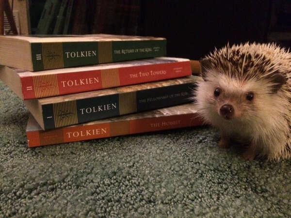 Прочитать еще что-нибудь из Толкина