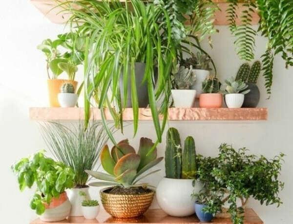 горшечные растения для домашней оранжереи