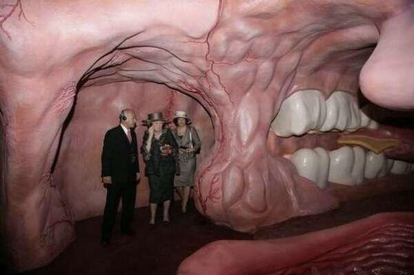 Посетить музей человеческого тела в городе Угстгест, Нидерланды