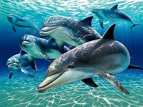 Погружение с дельфинами