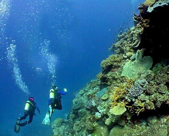 Нырнуть с аквалангом