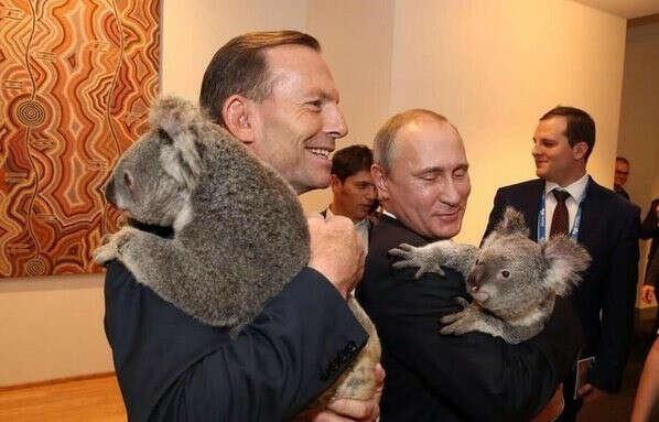 Подержать в руках коалу
