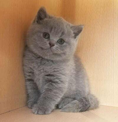 завести котенка