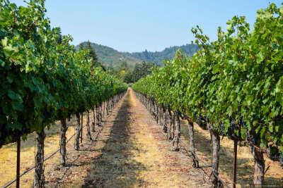 Экскурсия по виноградникам с дегустацией вина
