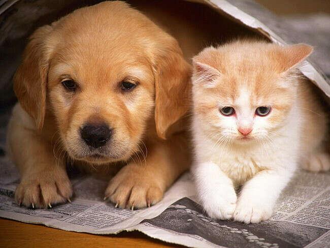 Помогать бездомным животным
