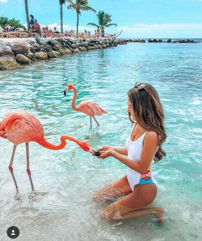 Побывать на острове Аруба, покормить фламинго и игуан