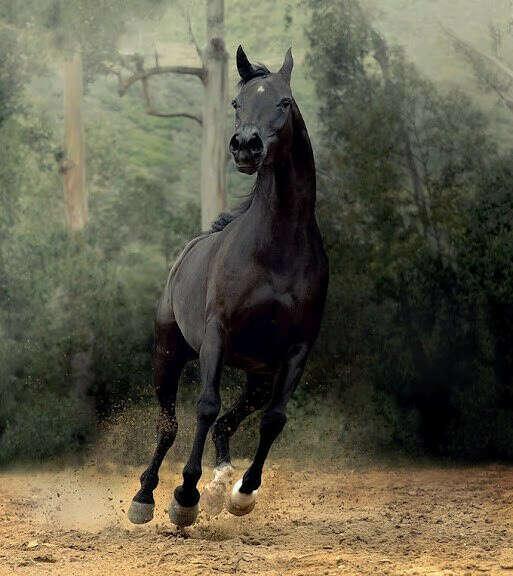 Часто кататься на лошадях