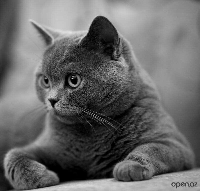 Завести кота