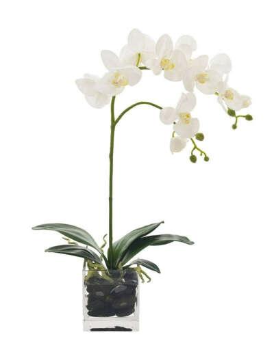 Белая орхидея (фаленопсис)