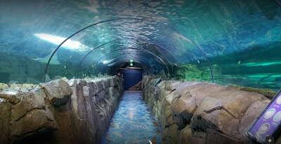 посетить океанариум в сиднее