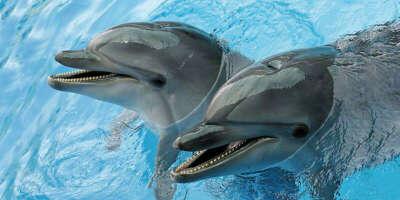 Посетить дельфинарий