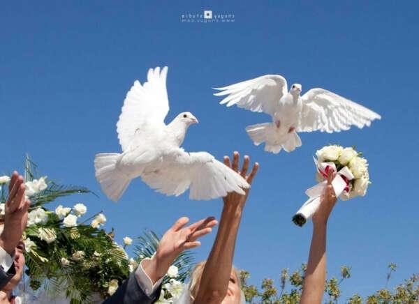 Запустить голубей
