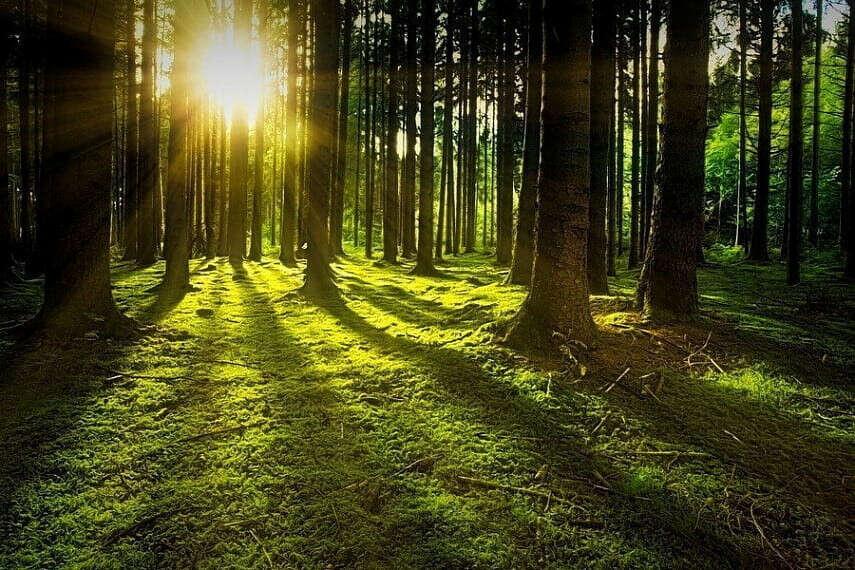 Посадить лес!