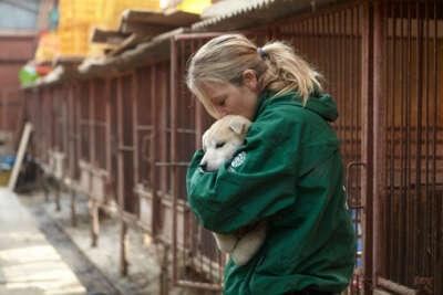 Открыть приют для животных