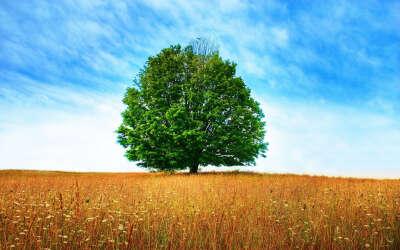посадить дерево =)