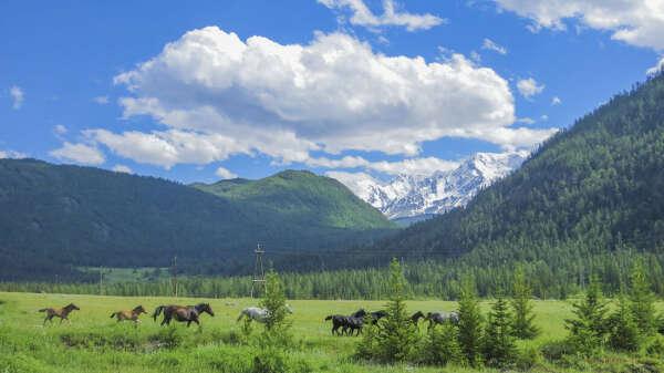 Хочу поездку на Алтай с малышом