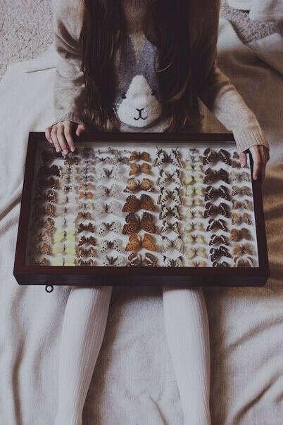 Коллекцию бабочек