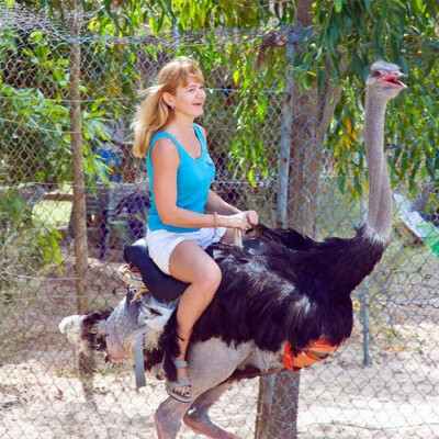 Прокатиться на страусе