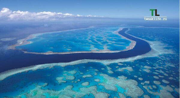 Побывать на Большом барьерном рифе