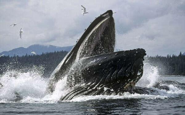 Увидеть китов в их естественной среде обитания