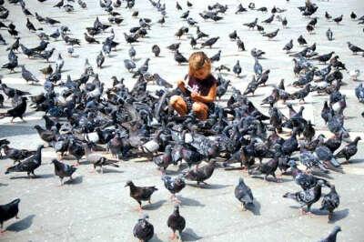 Покормить голубей в парке