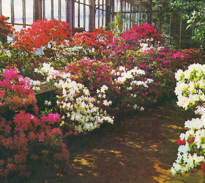 Посетить ботанический сад