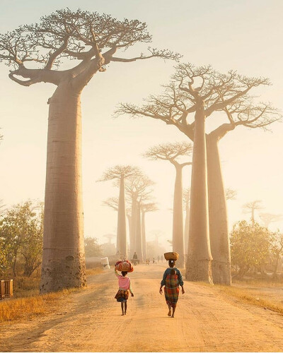 Посетить аллею баобабов. Мадагаскар