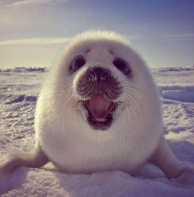 Погладить тюленя <3