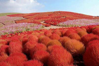 Несколько раз посетить Национальный парк Хитачи (Япония) в разные временна года
