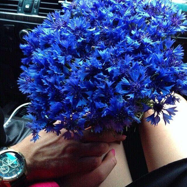 цветы без повода от любимого