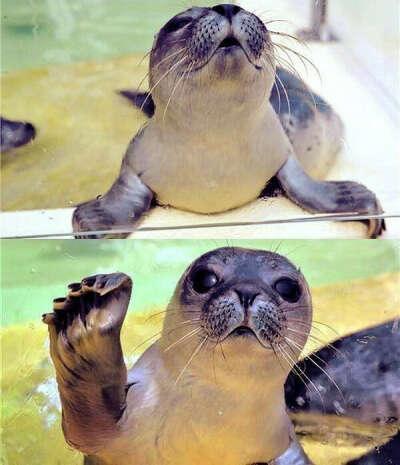 Потискать тюленя