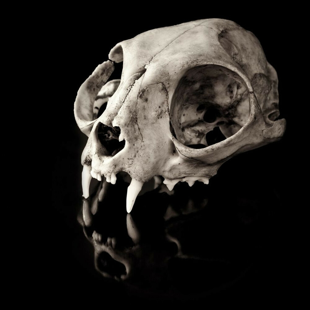 черепа животных