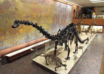сходить в палеонтологический музей
