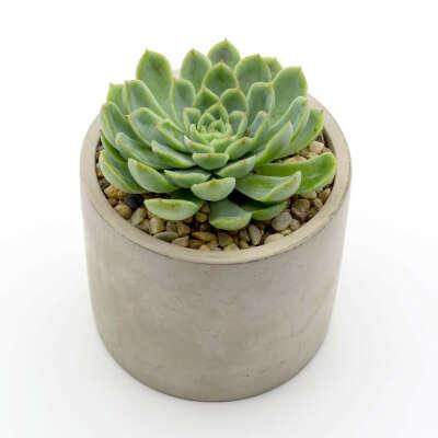 HAPPY LITTLE SUCCULENTS Succulent in a Concrete Pot