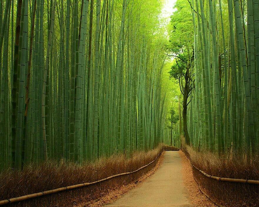 Погулять в бамбуковом лесу