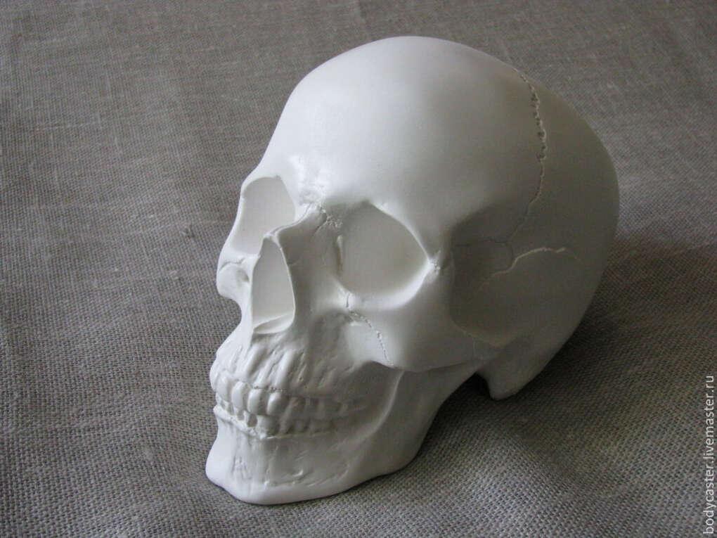 Всевозможные черепа,гипс.