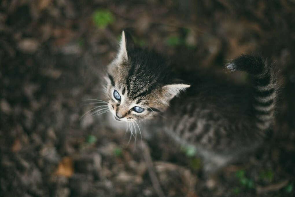 Котёнка
