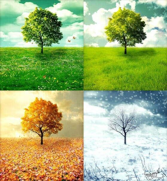 Прожить 4 сезона года в 4 разных странах