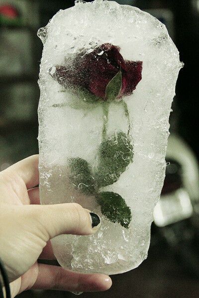 Заморозить розу во льду