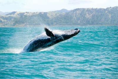 Увидеть китов в Исландии