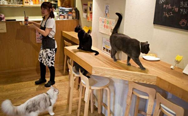 Посетить кото-кафе