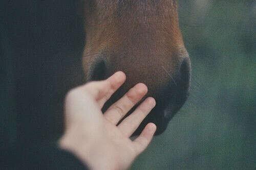 Погладить нос лошади.