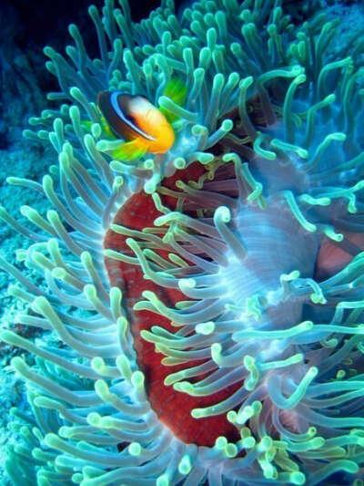Увидеть подводный мир