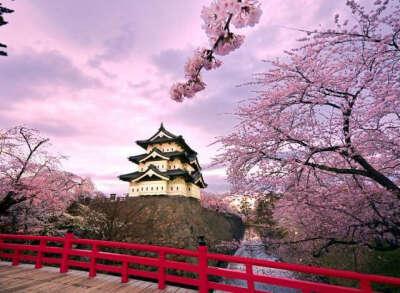 Побывать в Японии когда цветет сакура