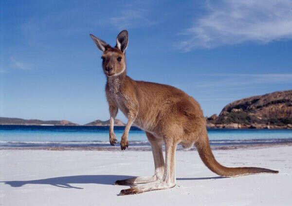 Поехать в Австралию