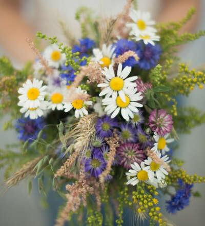 Собрать букет полевых цветов
