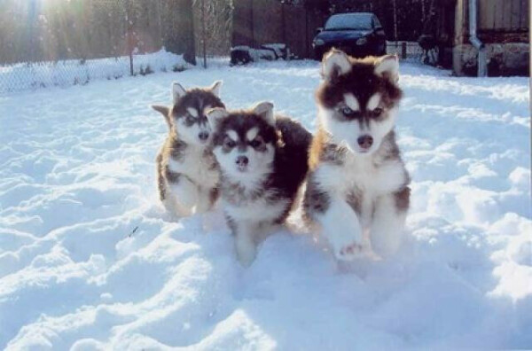 хочу щеночка :)