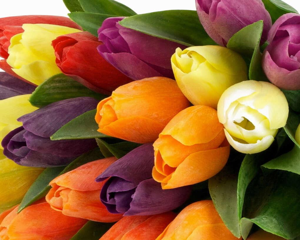Большущий букет разноцветных тюльпанов