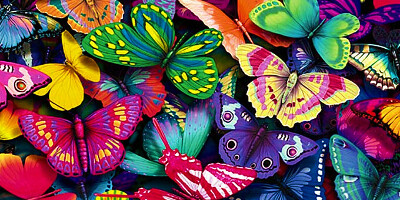 побывать в саду бабочек
