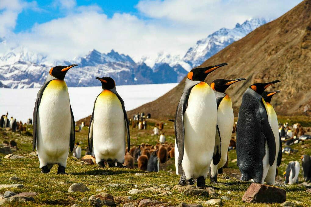 Экспедиция на Архипелаг Огненная Земля к Королевским пингвинам